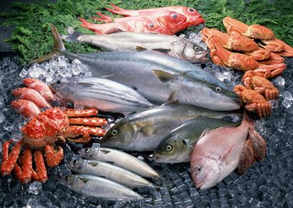 verschiedene Fischsorten