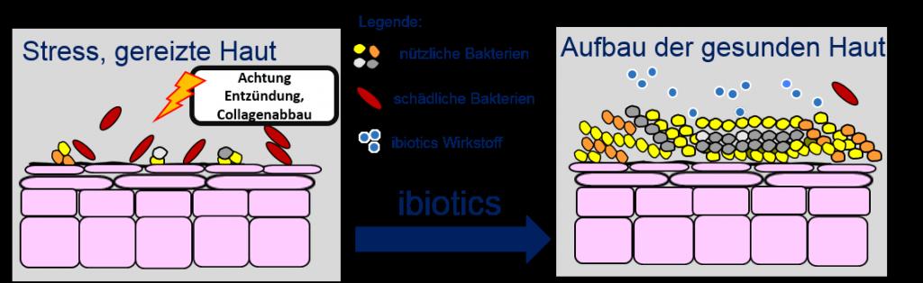 Probiotische Produkte für die Haut – die Innovation der Hauptpflege